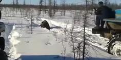 Relacionada oso mata
