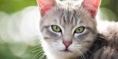 Relacionada gato