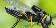 Relacionada abejas dron