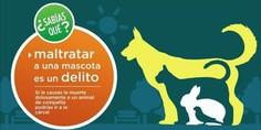 Relacionada 20170217 mascotas