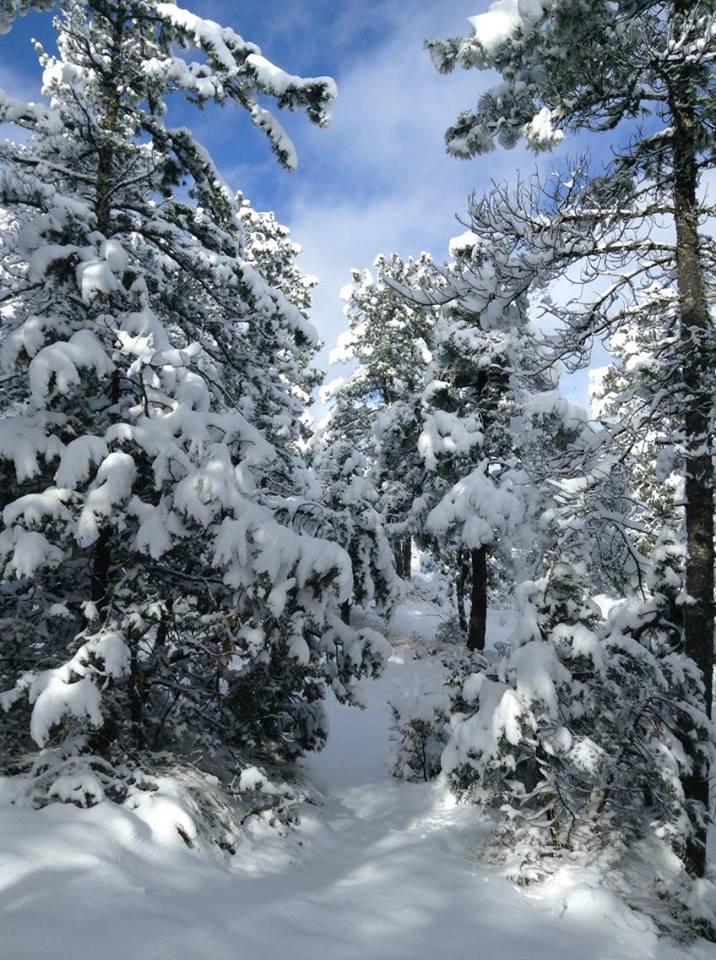 Nieve en creel lo pinta de blanco fotos tiempo for Blanco nieve