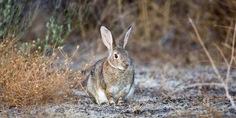 Relacionada conejo